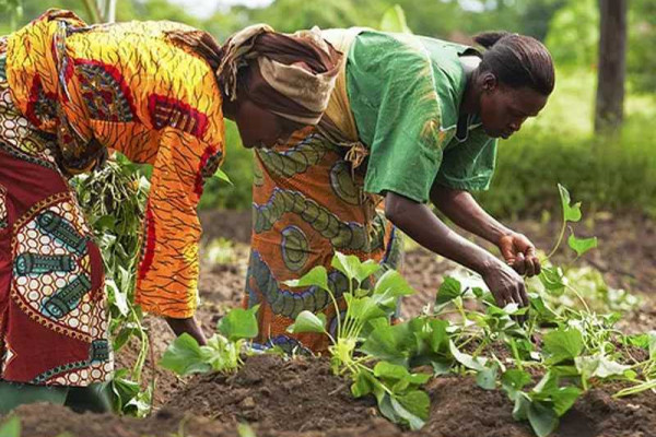 African governments asked to deploy resources for women engaged in agricultural activities