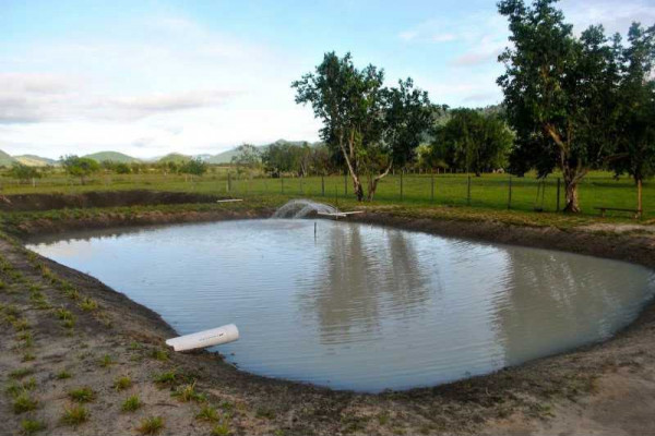 Dormaa central gets four earth ponds for catfish and tilapia production