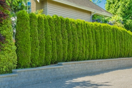 5 Green Fencing Ideas For Eco-Friendly Homes