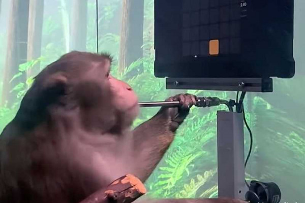 Elon Musk's Neuralink 'shows monkey playing Pong with mind'